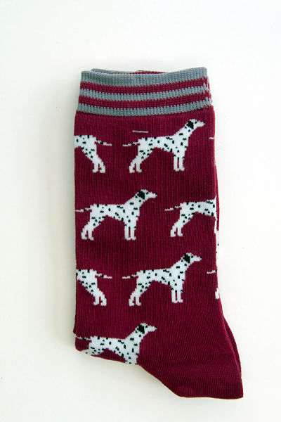 Dalmations with black spots and ears standing in rows on a burgundy coloured sock with grey and burgundy striped cuff