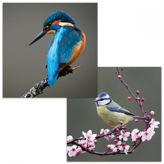 Large Square Cards. In one card a Kingfisher stares down perched on a branch. In the other card a blue tit is perched on branch with pink blossom