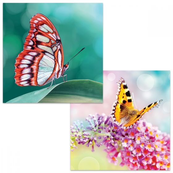 Large square cards. One card shows detail of a red and white butterfly on a green leaf and background. The other card shows a yellow and black butterfly perched on a pink buddleia blossom
