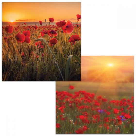 One card depicts a field of poppies at dawn with an ear of corn right at the front. The other card depicts poppies with their heads turned up to the full blaze of the sun