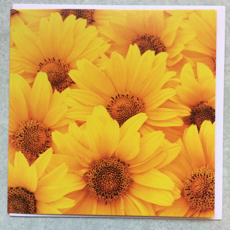 Sunflowers photographed face on crowd onto and completely cover the face of this card.