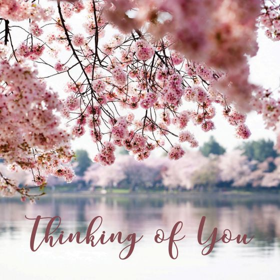 Looking through and under pink spring blossom to a lake surrounded by trees in blossom. Caption across the lower part of the card says 'Thinking of You""