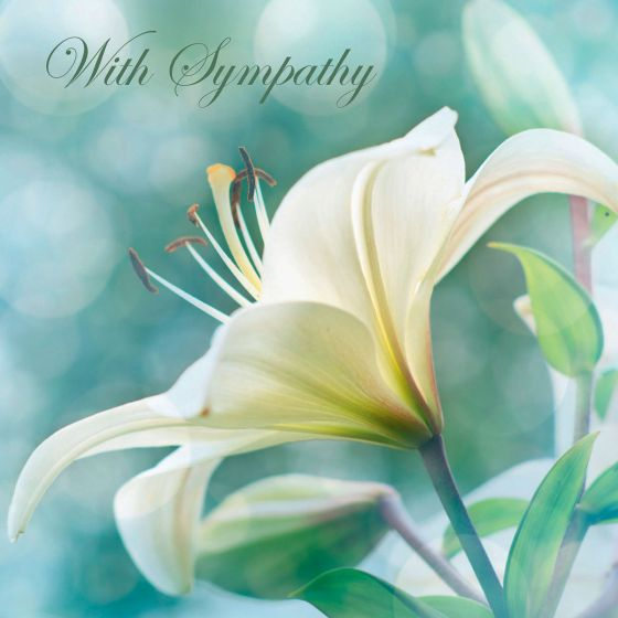 View of a white lily from the side against a background of soft nature greens. The message 'With Sympathy' is written in elegant script across the top of the card.